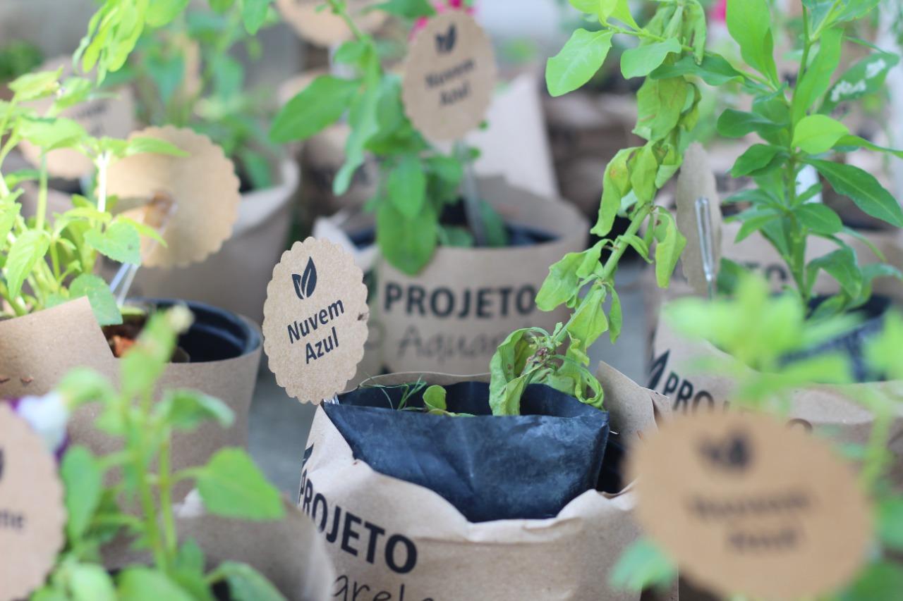 Cariacica: projeto social estimula alunos com ação no Dia da Árvore