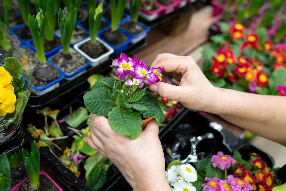 Evento em Vitória terá garden de 450m² com flores, arranjos e enfeites